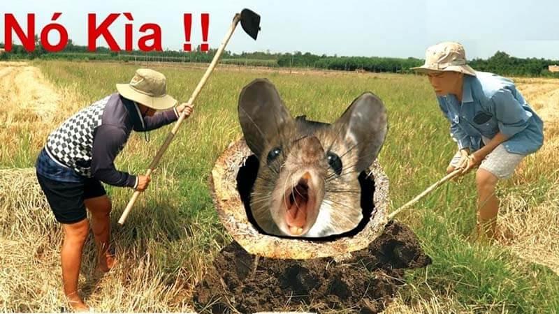 Chiêm bao thấy bắt chuột