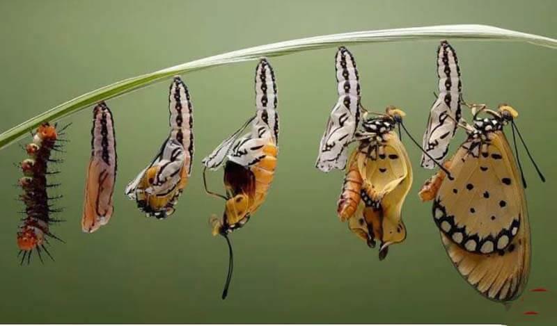 Mơ thấy sâu hóa thành bướm