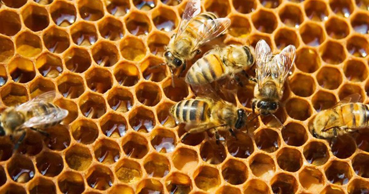 mo thay to ong